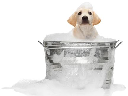 Toilettage de chien en libre-service | Petty blog